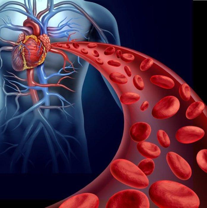 uklad-krwionosny