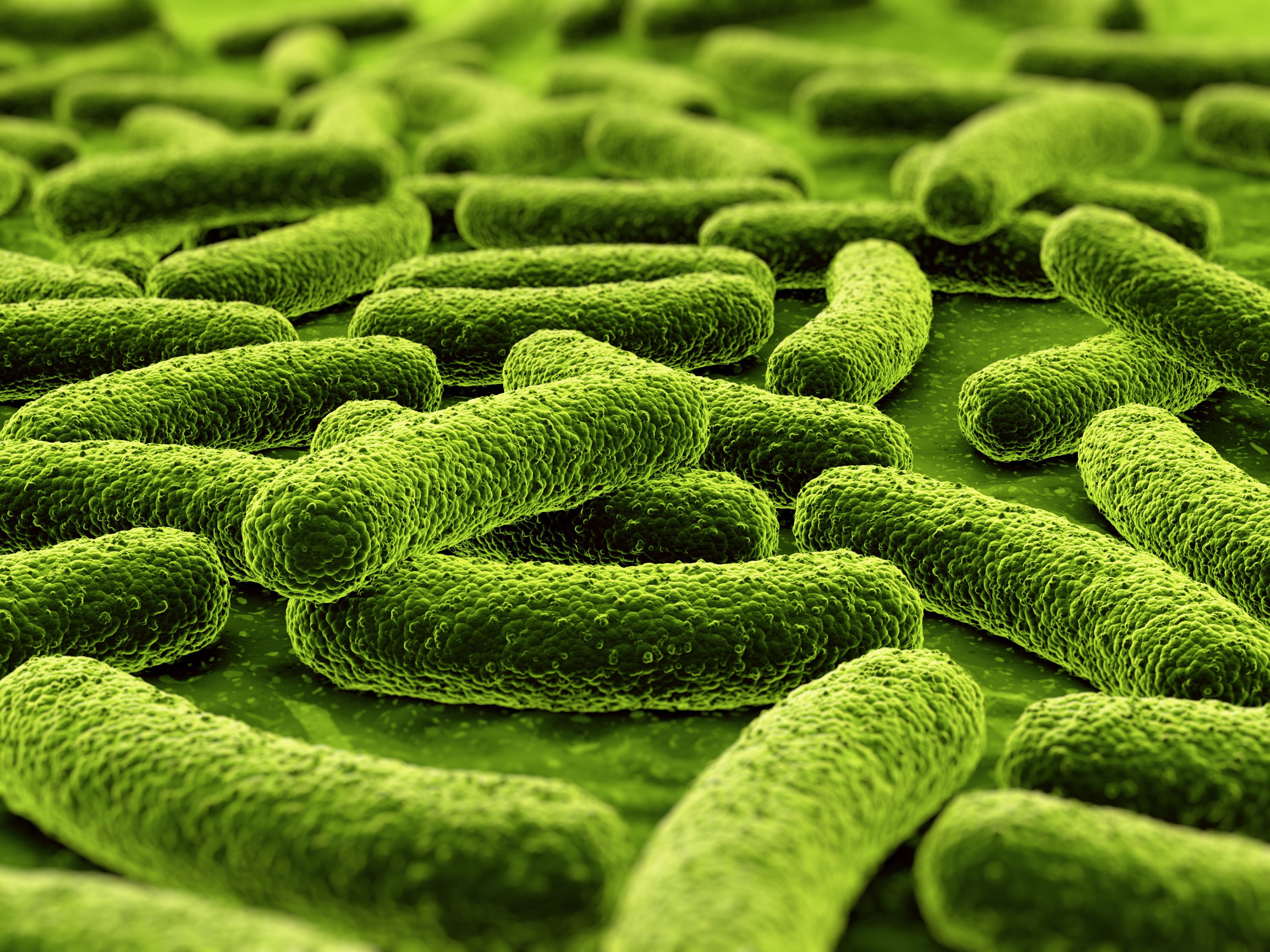 RS7067_sy_green_bacteria_cl_A3397889_clean_2015